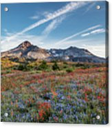 Wildflowers At Mt. St. Helen's Acrylic Print