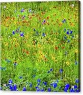 Wildflowers In Bloom Acrylic Print