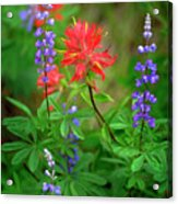 Wildflowers In Mountains Wilderness Acrylic Print