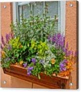Window Box Blooms Acrylic Print