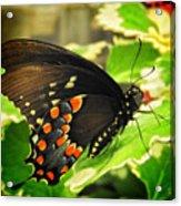 Wings Of Fancy Acrylic Print