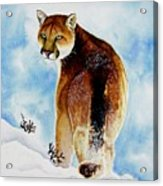 Winter Cougar Acrylic Print