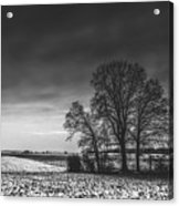 Winter Fields Acrylic Print