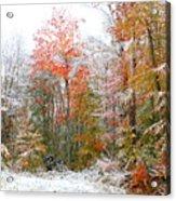 Winterfall  Acrylic Print