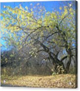 Wolley Acrylic Print