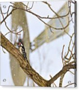 Woodpecker And Windmill Acrylic Print