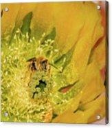 Working Bee Acrylic Print by Allen Sheffield
