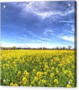 Yellow Fields Of Summer Acrylic Print