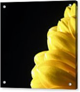Yellow Gerbera Flower Acrylic Print