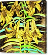 Yellow Lilies, Hand Drawn Painting Acrylic Print