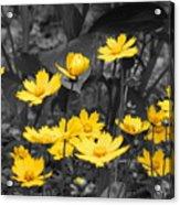Yellow Lust Acrylic Print