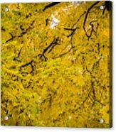 Yellow Tree Acrylic Print