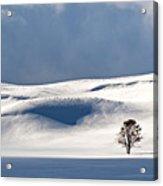 Yellowstone Winter Acrylic Print
