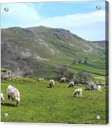 Yorkshire Dales - England Acrylic Print