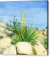 Yucca Tree Acrylic Print