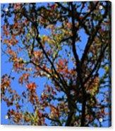 10-15-16--0777 Blue Sky # 3 Don't Drop The Crystal Ball Acrylic Print