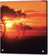 African Sunrise Acrylic Print