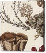 Aquatic Animals - Seafood - Algae - Seaplants - Coral Acrylic Print