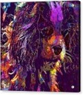 Dog Cavalier King Charles Spaniel  Acrylic Print