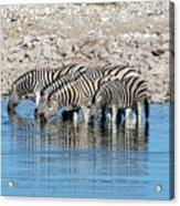 Etosha - Namibia Acrylic Print