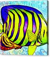 Underwater. Fish. Acrylic Print