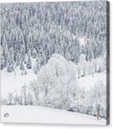 Winter Landscapes Acrylic Print