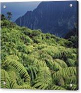 100139 Amaumau Ferns Hawaii Acrylic Print