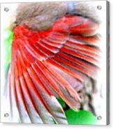 1055-001 - Northern Cardinal Acrylic Print