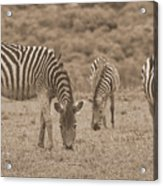 South Africa Acrylic Print
