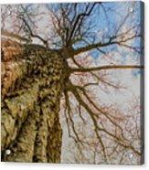 10913 I Am Groot Acrylic Print