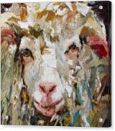 10x10 Sheep Acrylic Print