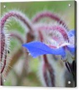 Closeup Of A Colourful Flower Acrylic Print