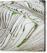Terrace Fields Scenery In Spring Acrylic Print