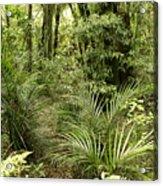 Jungle 31 Acrylic Print