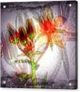 11305 Flower Abstract Series 03 #5 Acrylic Print