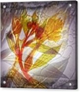 11315 Flower Abstract Series 03 #13 Acrylic Print