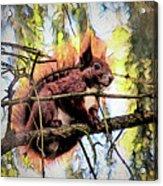 11451 Red Squirrel Sketch Acrylic Print