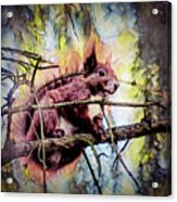 11452 Red Squirrel Sketch Square Acrylic Print