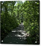 1174, Forest Path Acrylic Print
