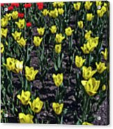 Flower Carpet. Acrylic Print