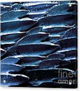 Shark Skin, Sem Acrylic Print