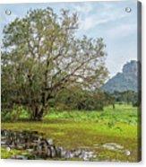 Sigiriya - Sri Lanka Acrylic Print