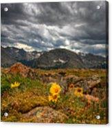 12000 Foot Flower Acrylic Print