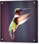 1257-006 - Ruby-throated Hummingbird Acrylic Print