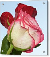 Two Roses Acrylic Print