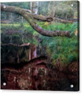New Forest - England Acrylic Print