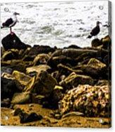 Ca Bird Acrylic Print