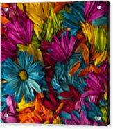 Daisy Petals Abstracts Acrylic Print