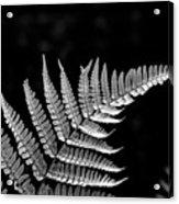 Fern Close-up  Acrylic Print