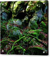 Fontainebleau Forest Acrylic Print